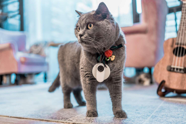 Kamera przymocowana zawieszką do kota.